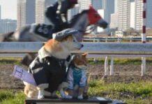 Cane e gatto viaggiano insieme