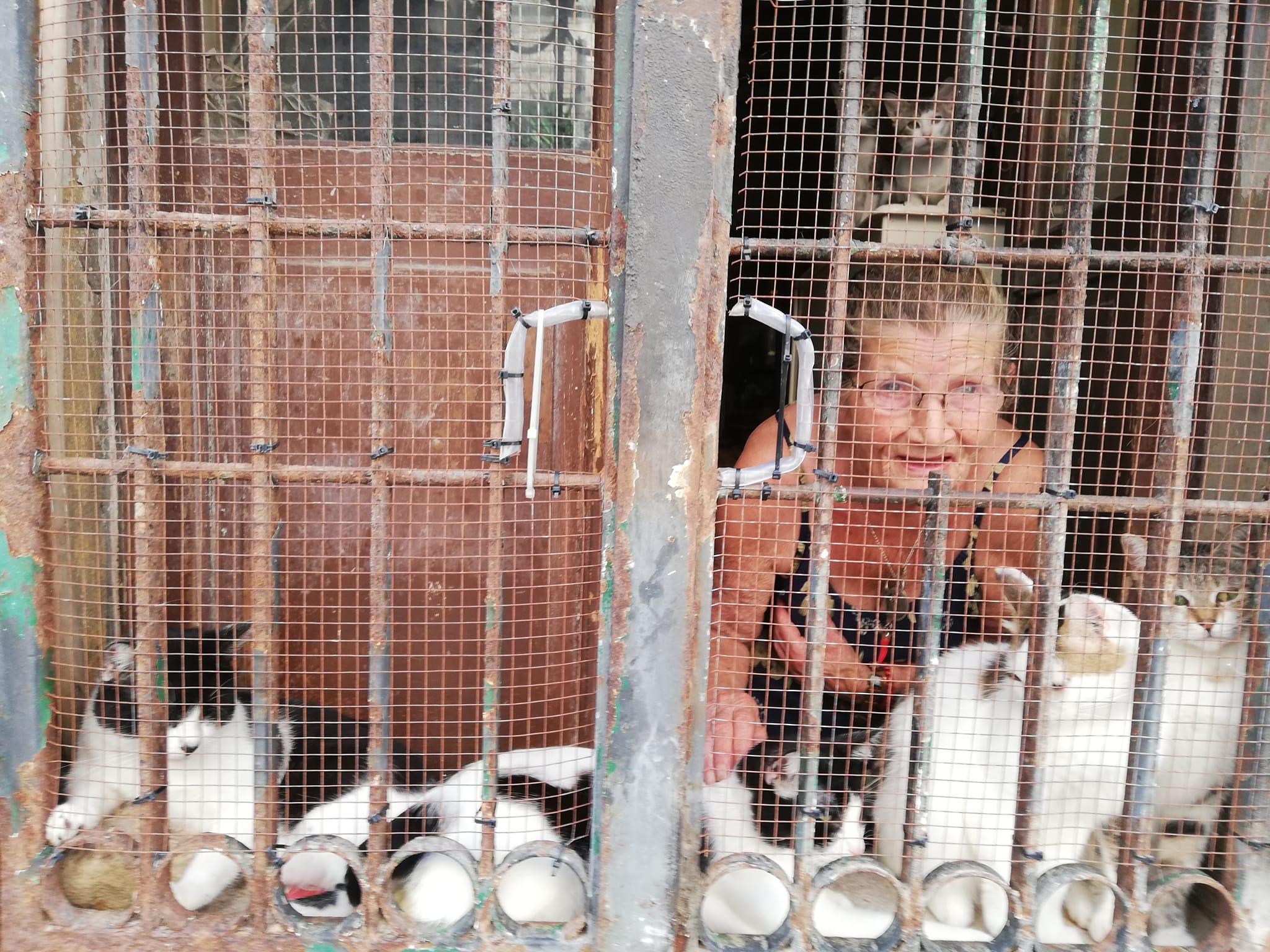 Donna con molti gatti