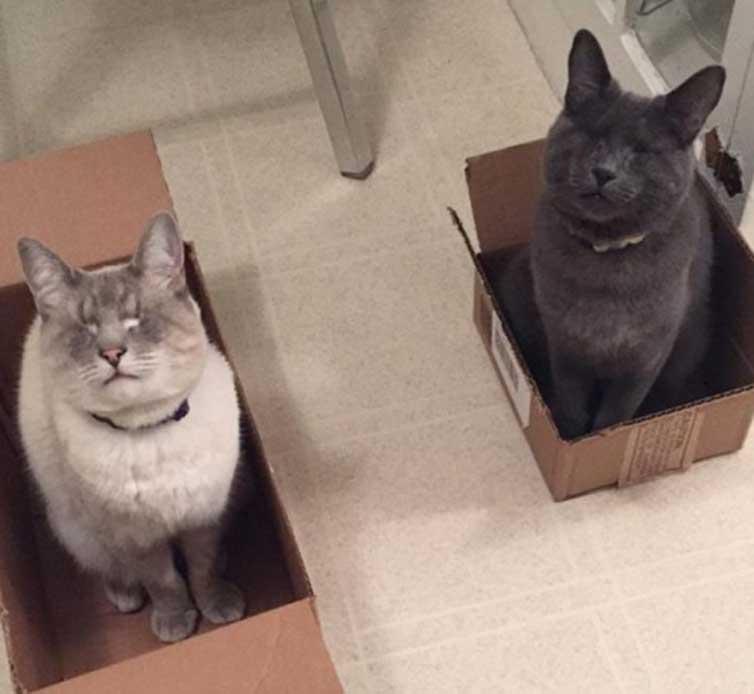 Due gatti ciechi dentro a delle scatole