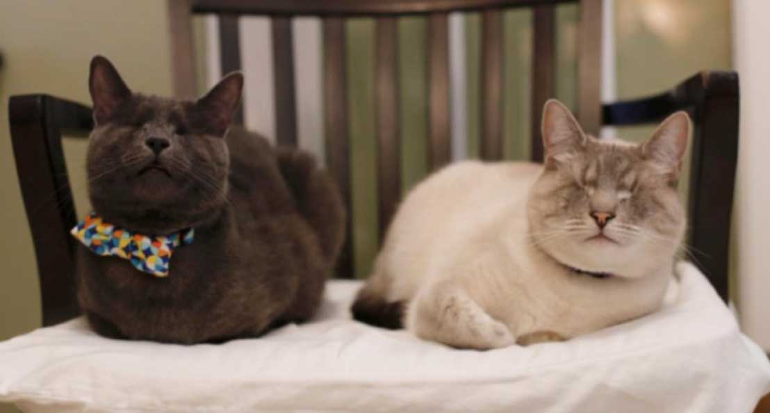 Due gatti ciechi