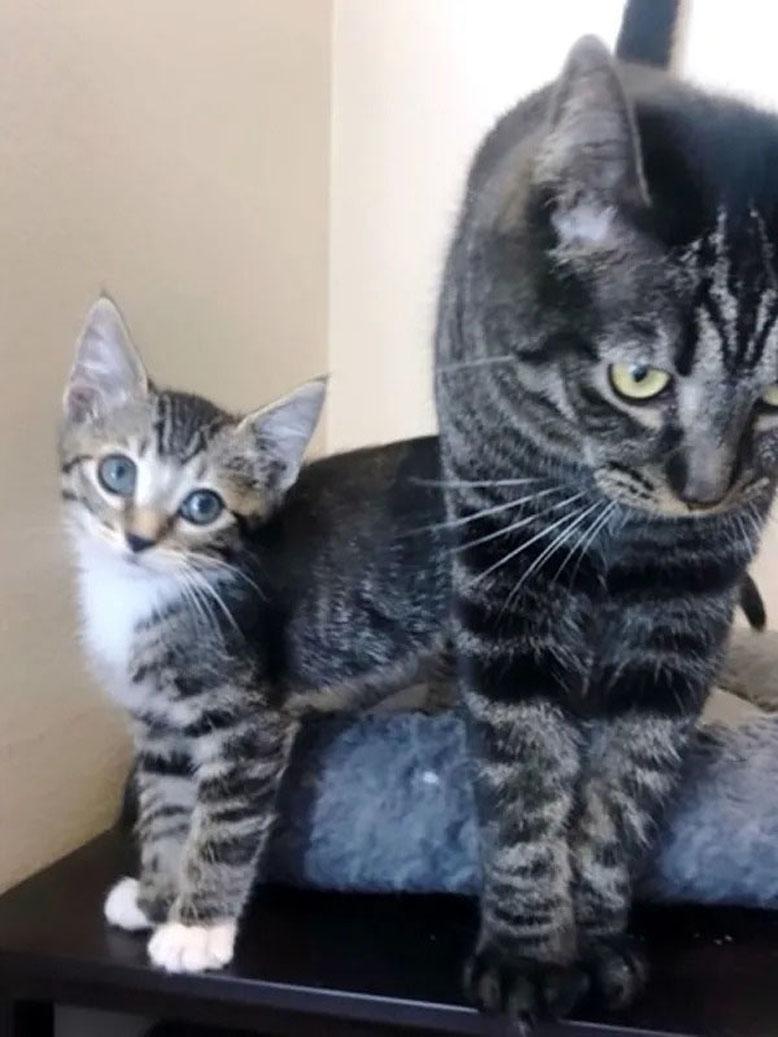 Due gatti insieme
