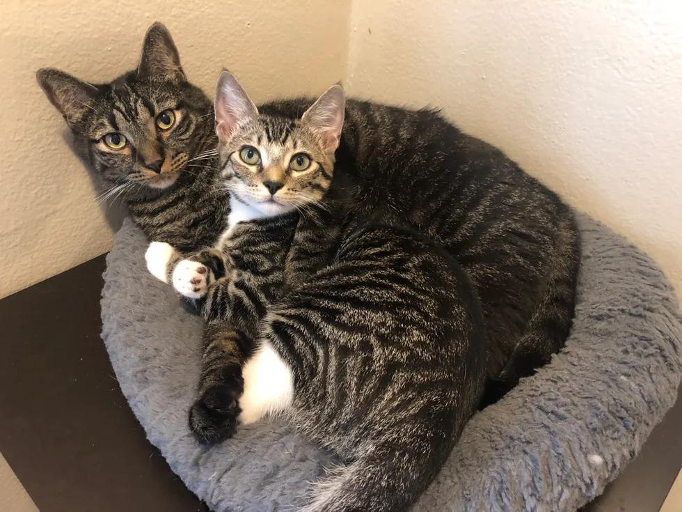Due-gattini-che-dormono-insieme