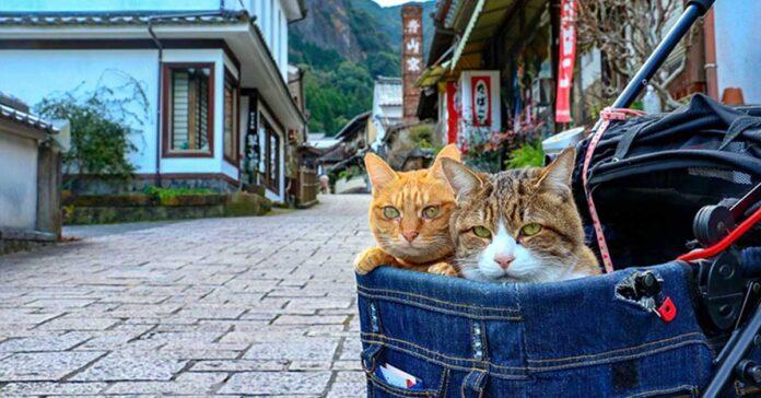 Gatti Daichiki e Fuku-Chan