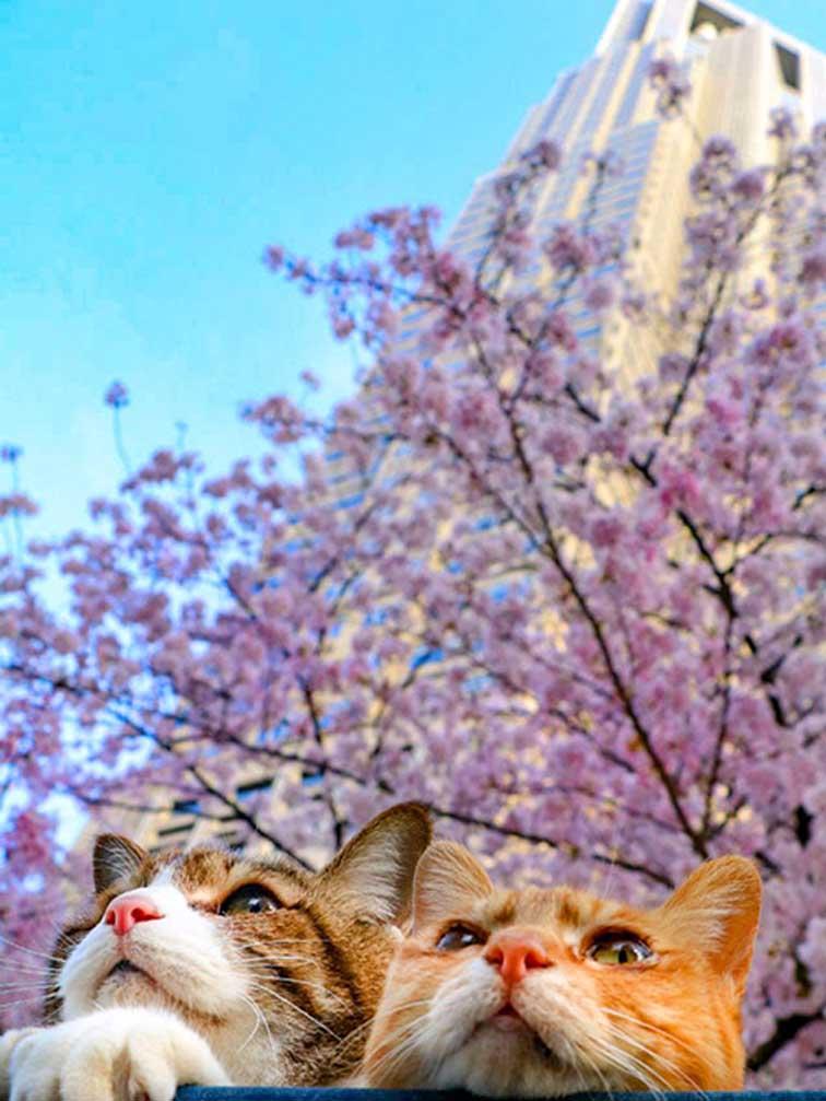 Gatti che guardano in alto