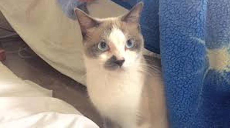 Gattina di nome Ivy