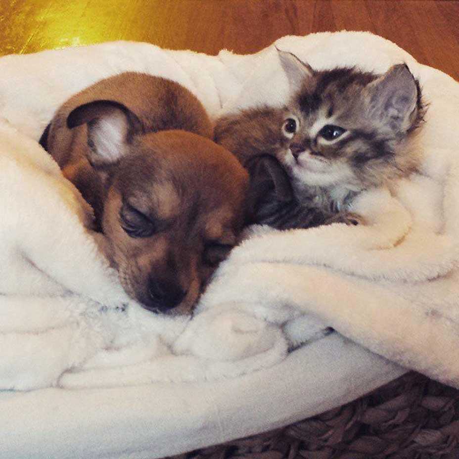 Gatto Adele e cane Chip
