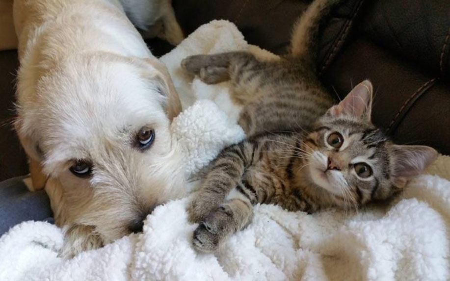 Gatto Kramer insieme ad un cane