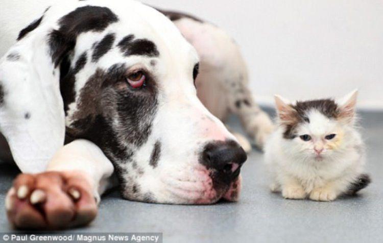 Gatto Zephyr con un cane