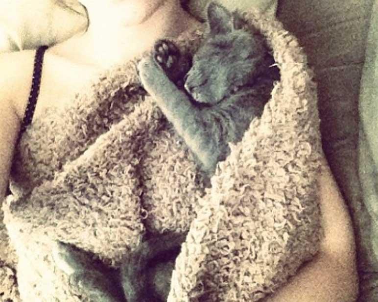 Gatto che dorme dentro ad una coperta