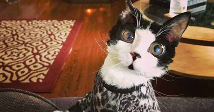 Gatto con gli occhi grandi