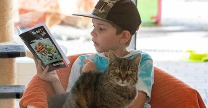 Gatto-con-un-bambino