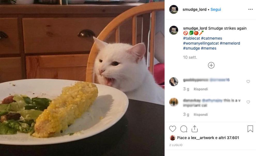 Gatto di nome Smudge