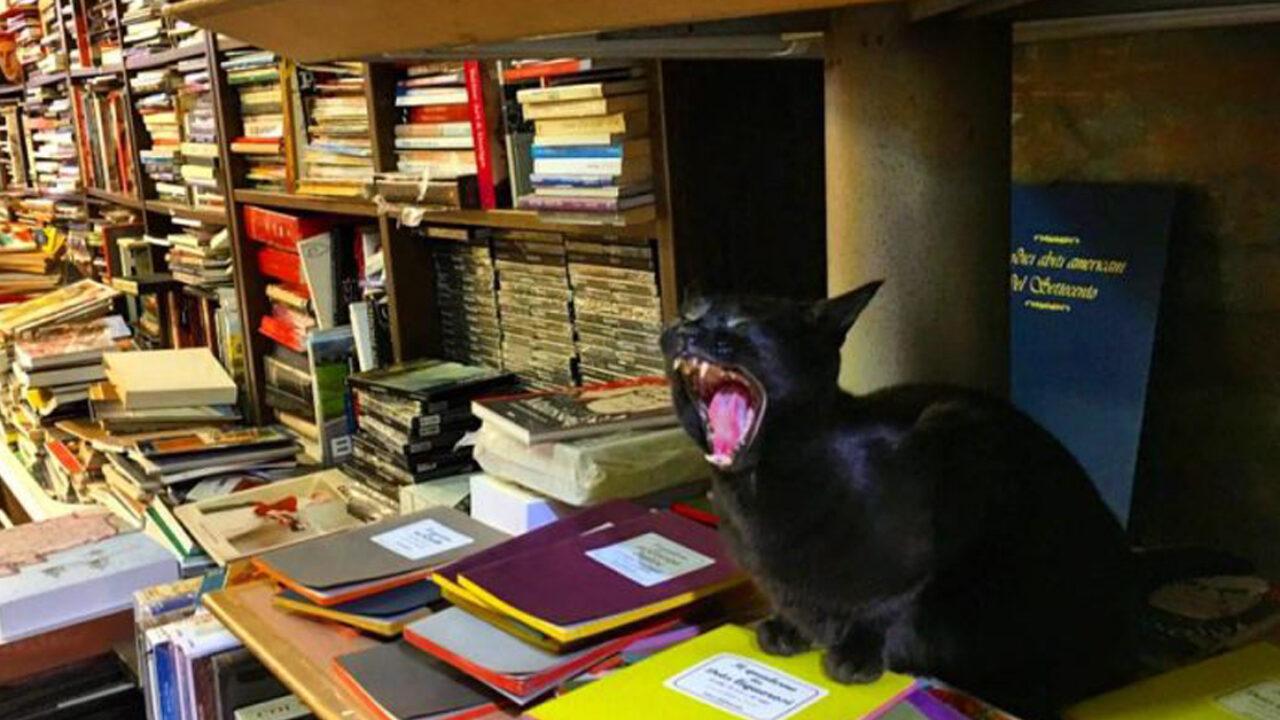 A Venezia c'è una libreria dei gatti, la libreria Acqua Alta   Il ...