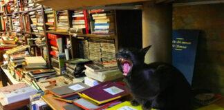 Gatto in una libreria di Venezia