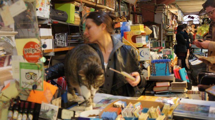Gatto nella libreria Acqua alta a Venezia