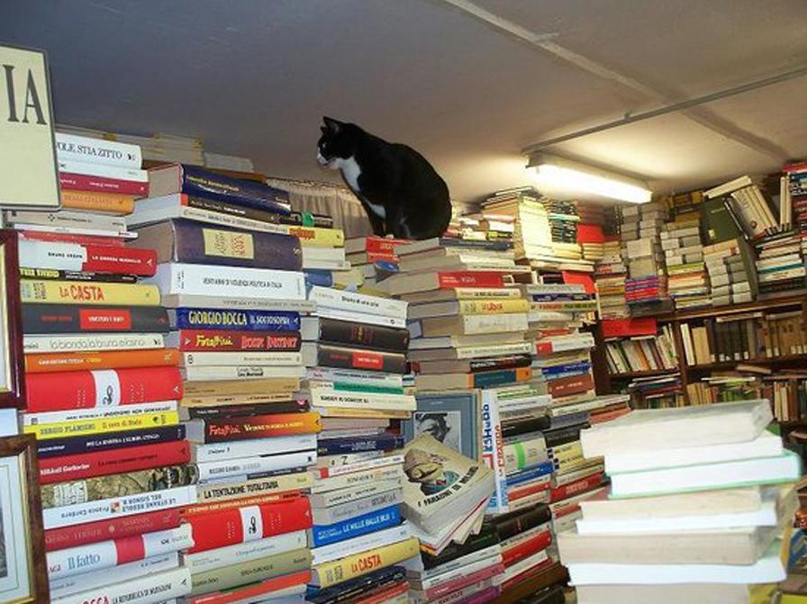 Gatto nella libreria di Venezia