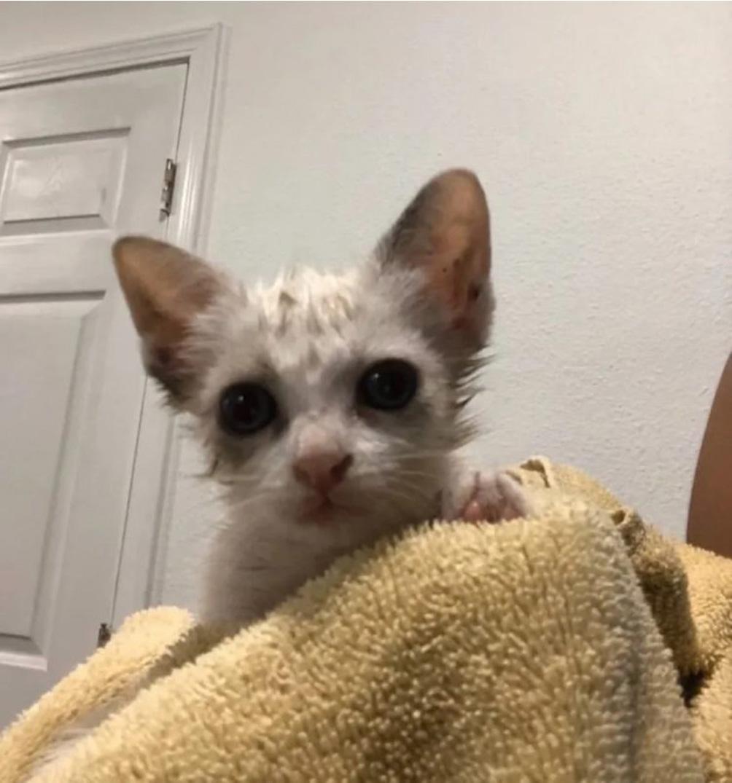 Il gattino Bella
