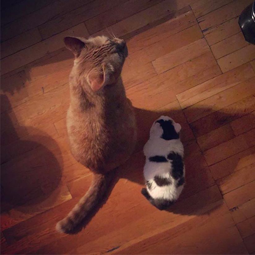 Il gattino Giselle