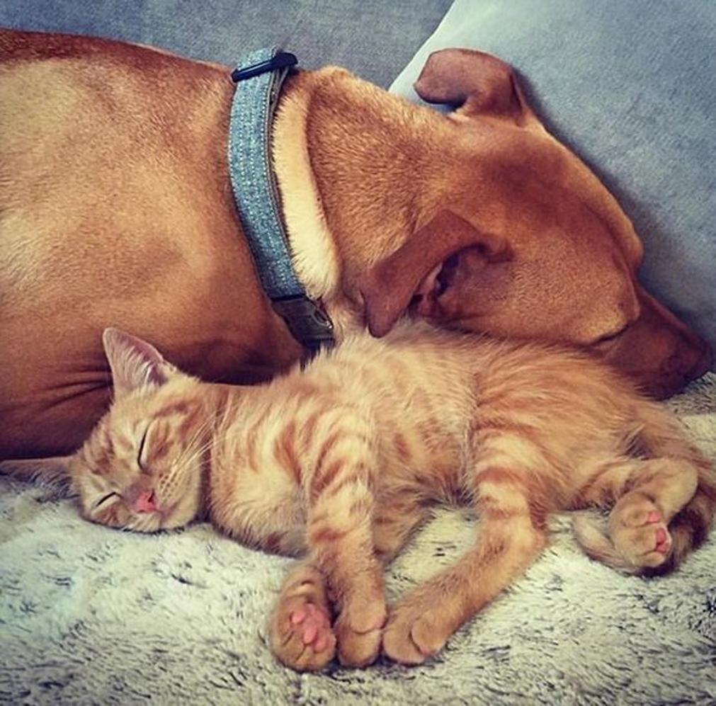 Il gattino Rue che dorme con un cane