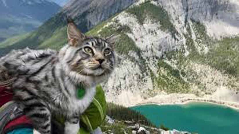 Il gatto Bohdi