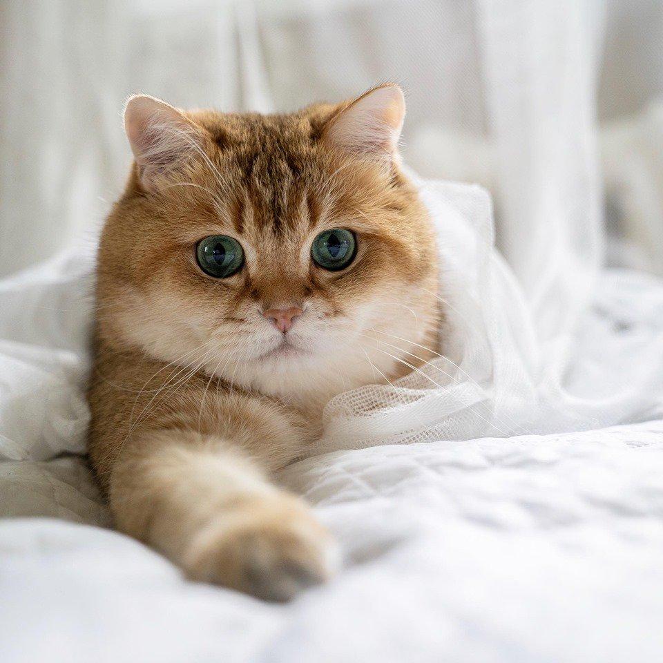 Il gatto Garfield