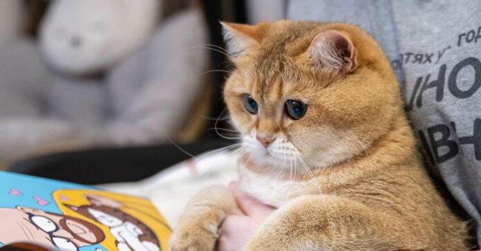 Il gatto Hosico