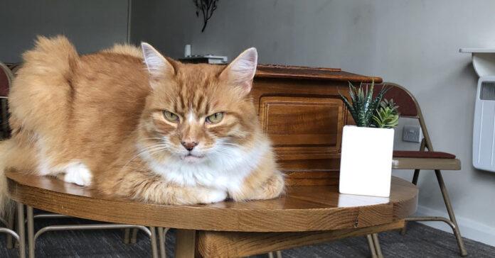 Il gatto Paddy