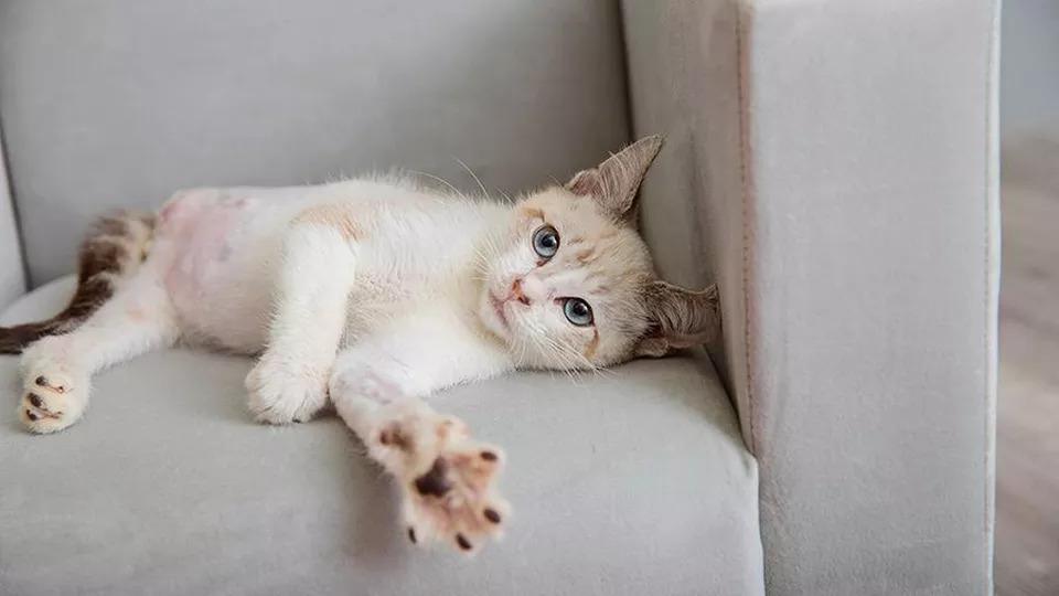 Il-gatto-Pelota