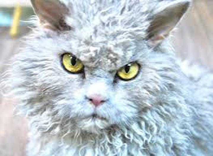 Il gatto Pompous Albert
