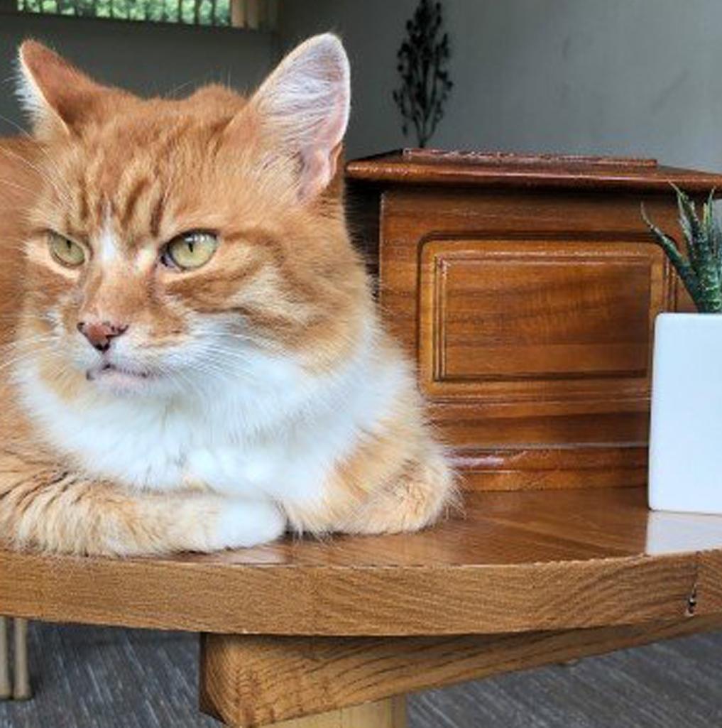 Il gatto di nome Paddy