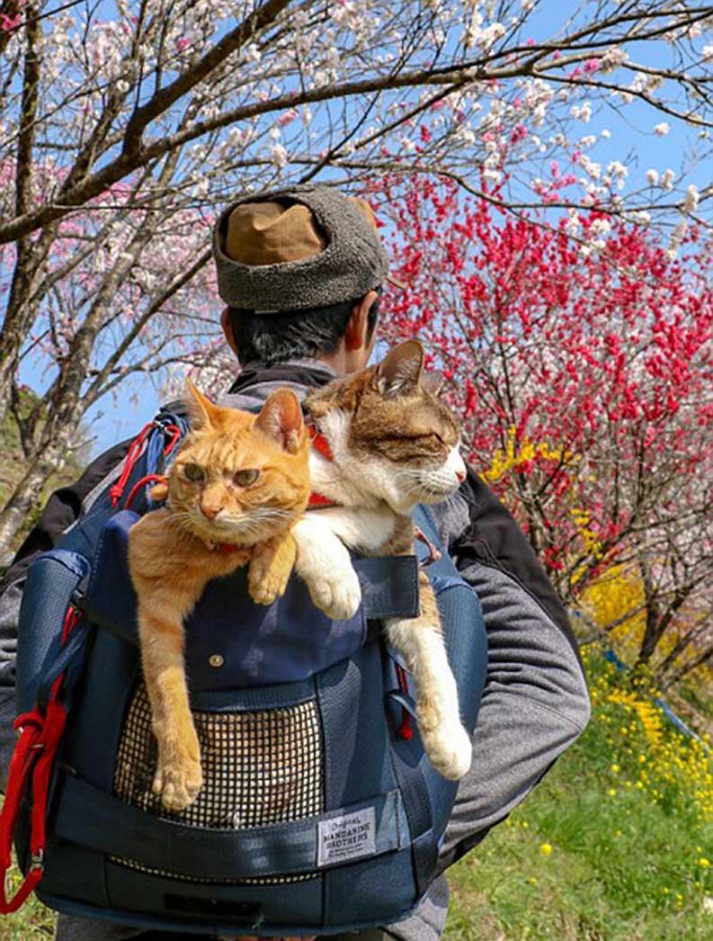 La storia dei gatti Daichiki e Fuku-Chan