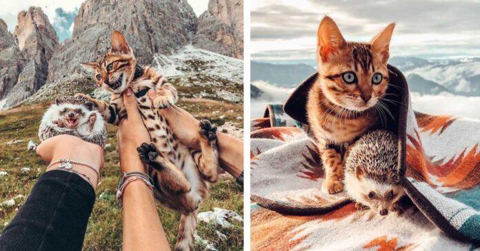 La storia del gatto Audree