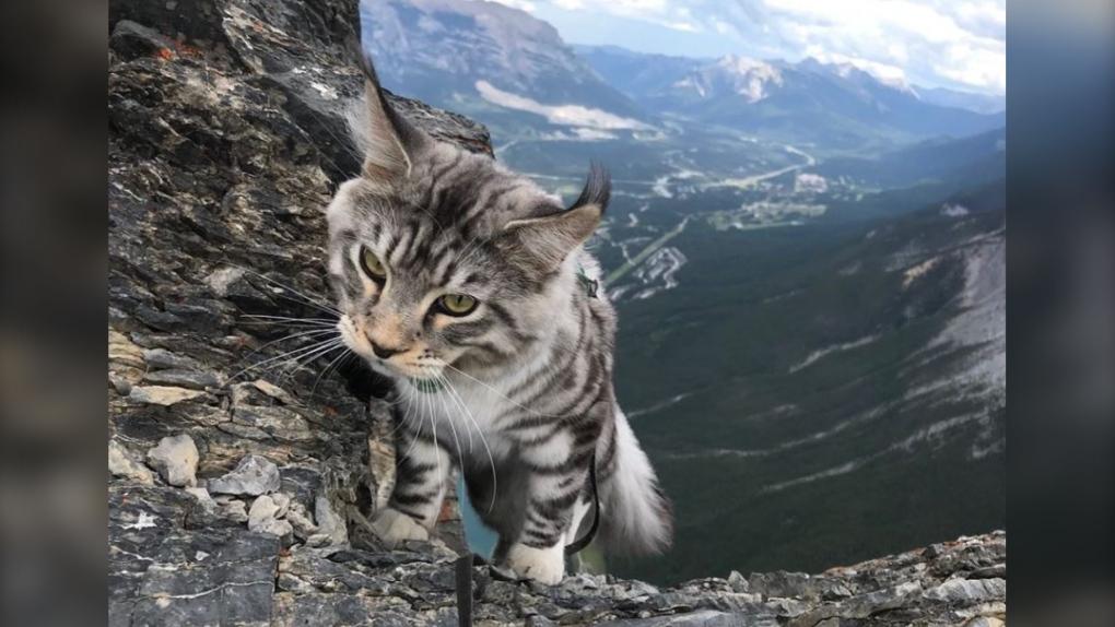 La storia del gatto Bohdi