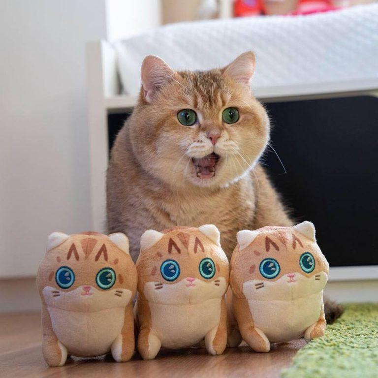 La storia del gatto Hosico