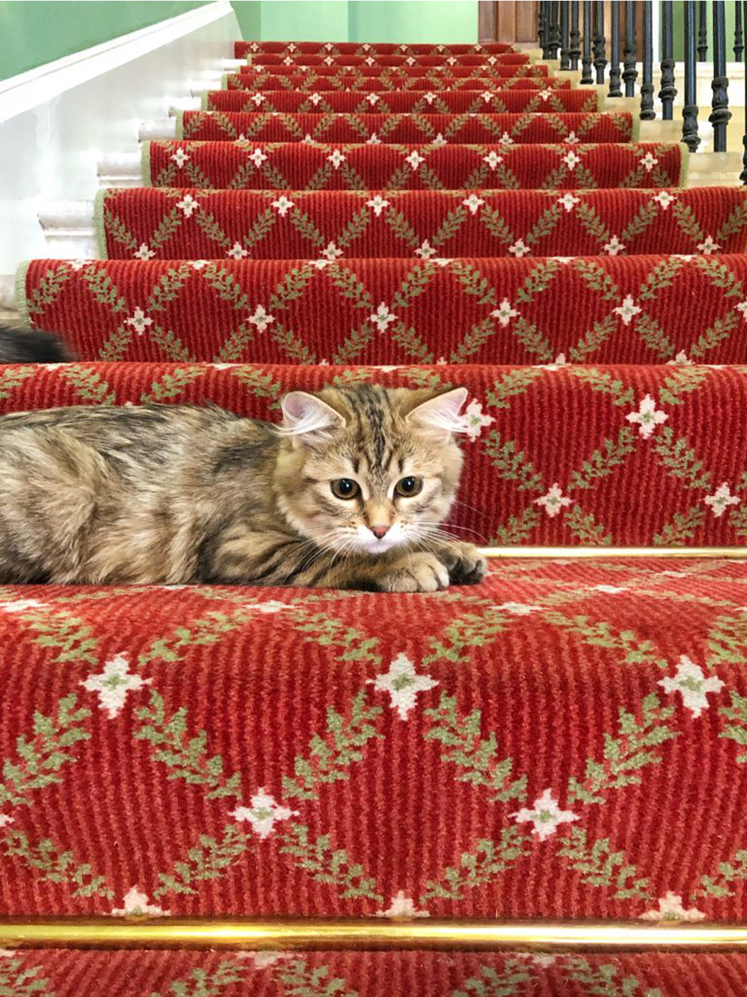 La storia del gatto Lilibet