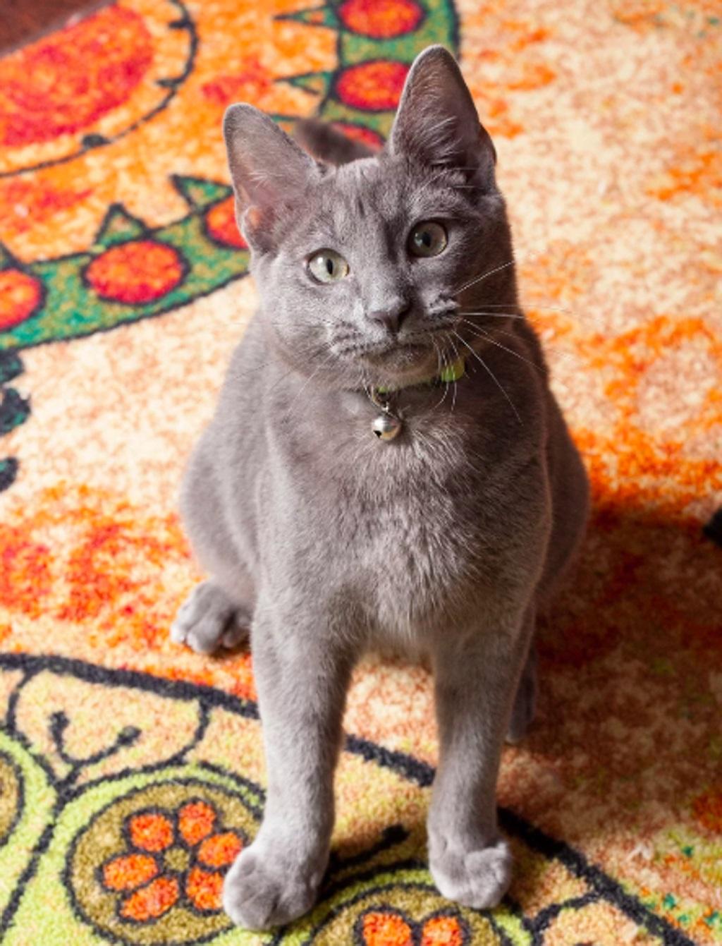 La storia del gatto Merrick