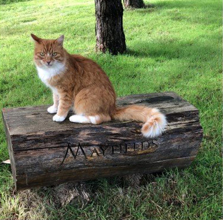 La storia del gatto Paddy