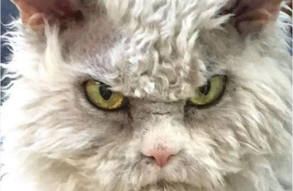 La storia del gatto Pompous Albert