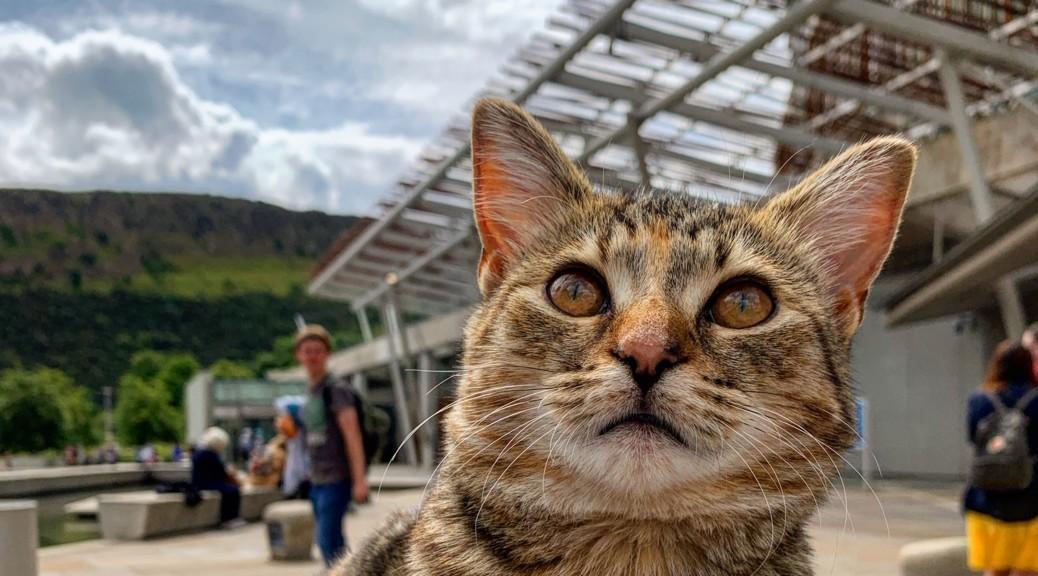 La storia del gatto Quita