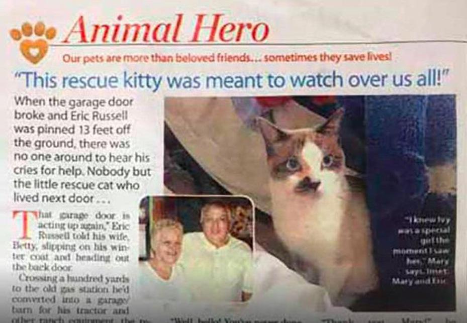 La storia della gattina Ivy