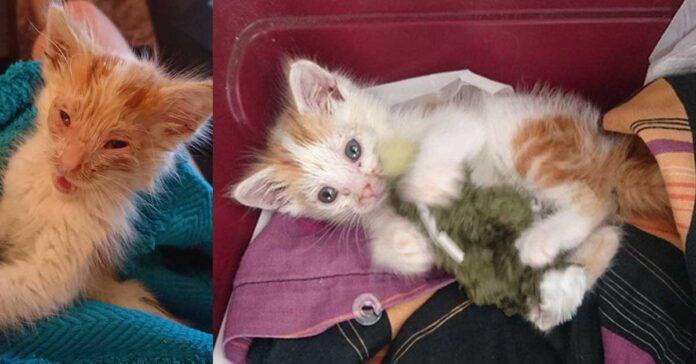 La trasformazione del gatto Giovanni