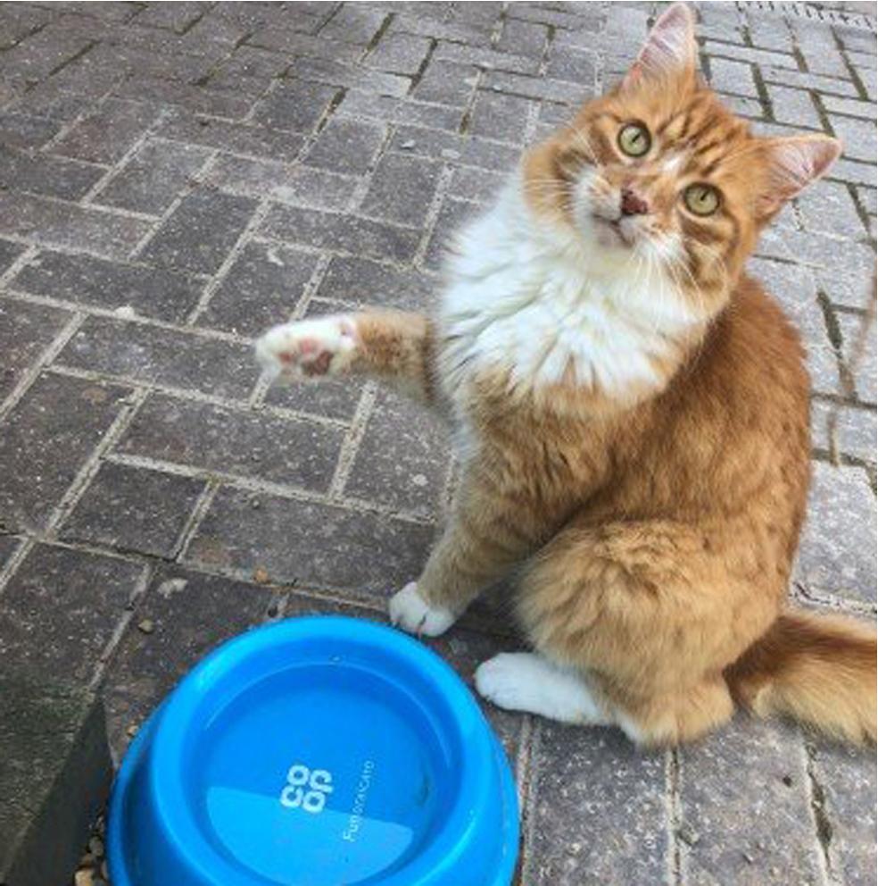 La vicenda del gatto Paddy
