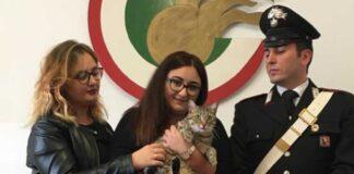 La vicenda del gatto Tigruz