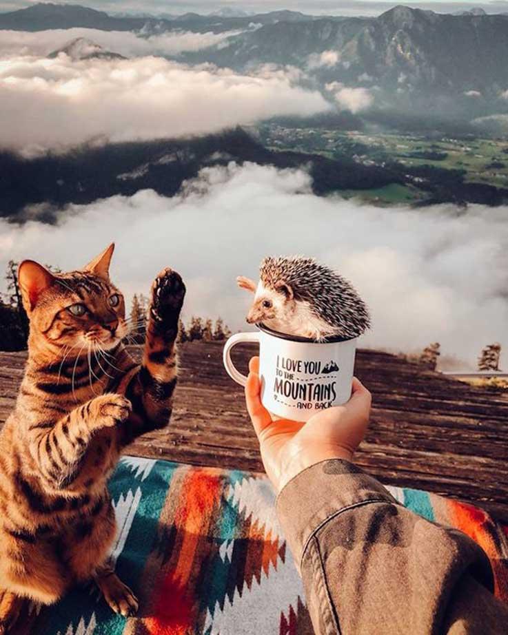 L'amicizia di un gatto con un riccio