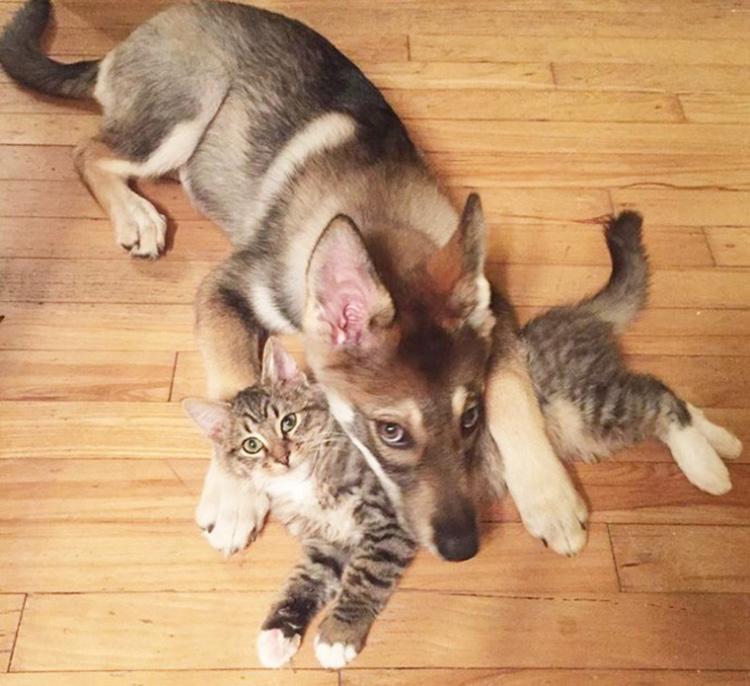 L'amicizia tra il gatto Woodhouse e il cane Raven
