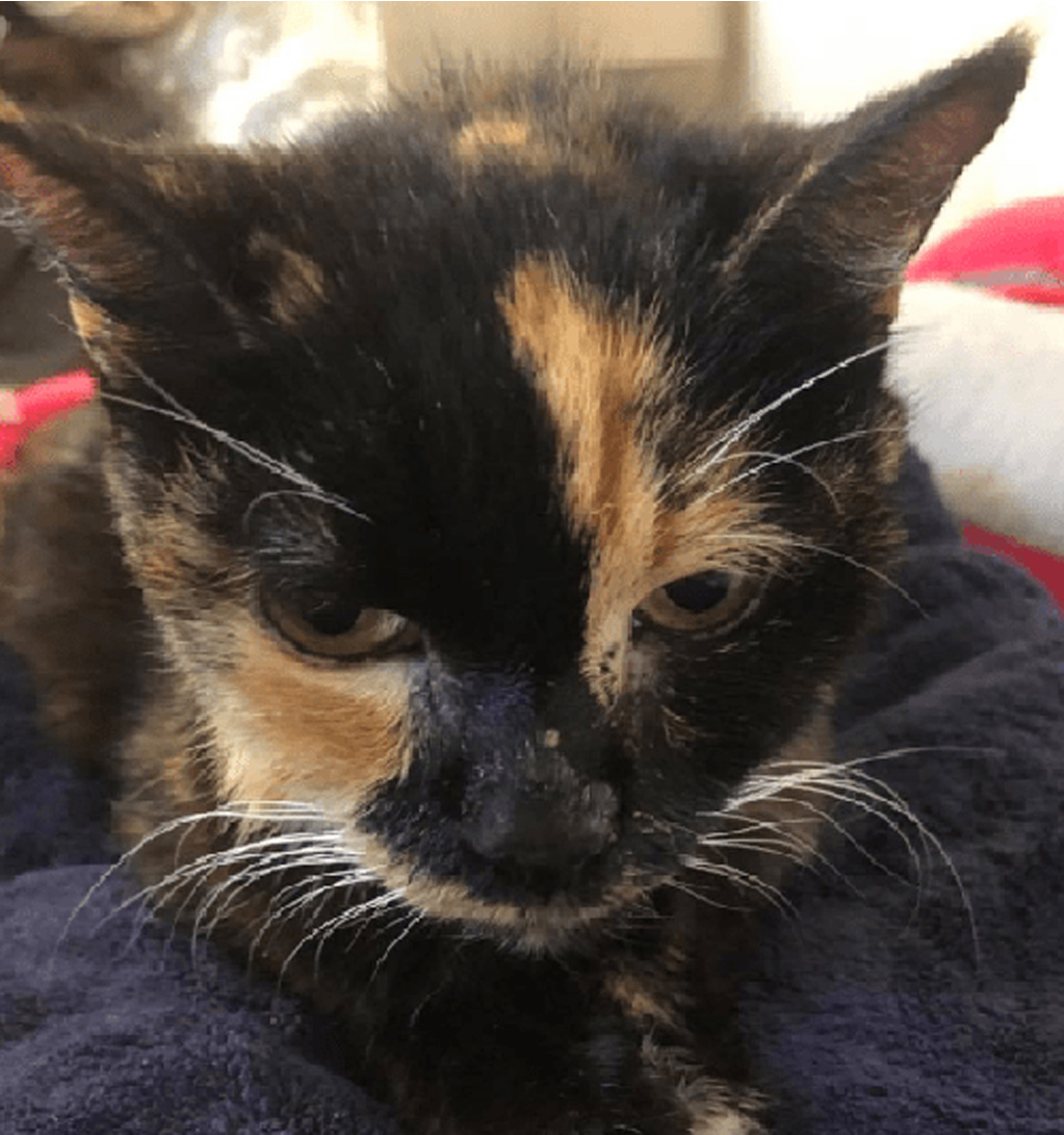 Miss Kitty gatto