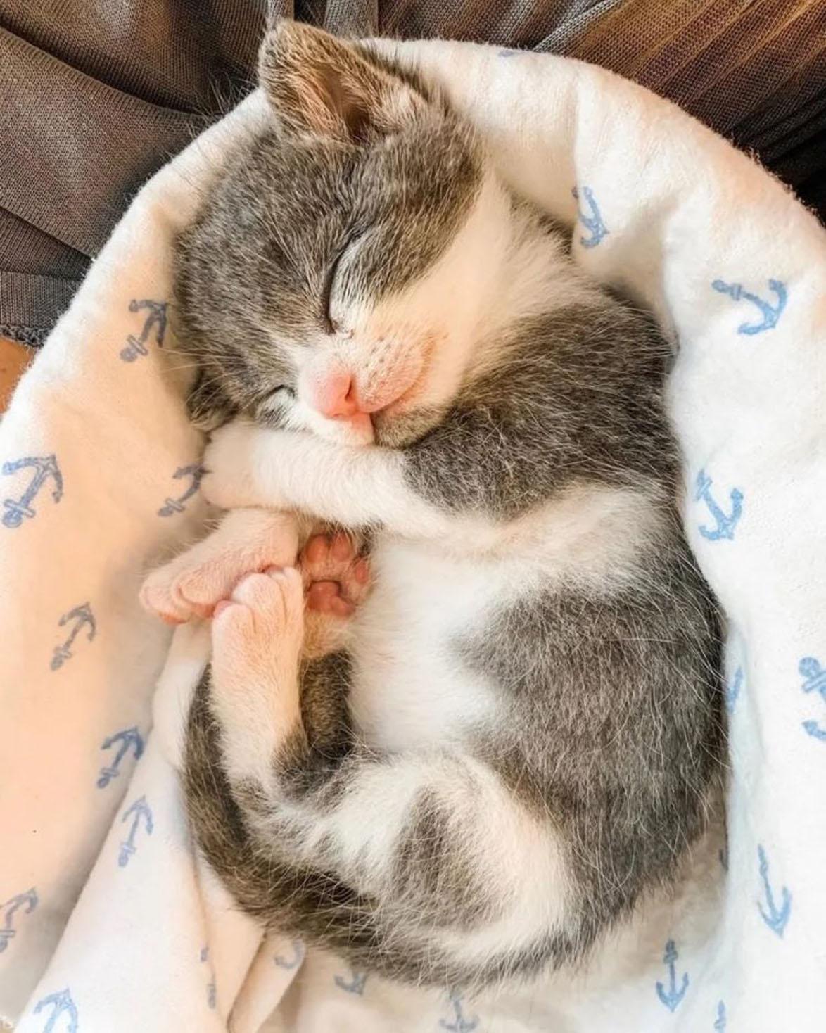 Mr. Tiny Pants gattino