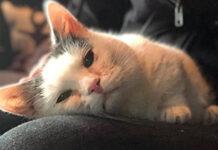 Storia del gatto Giselle