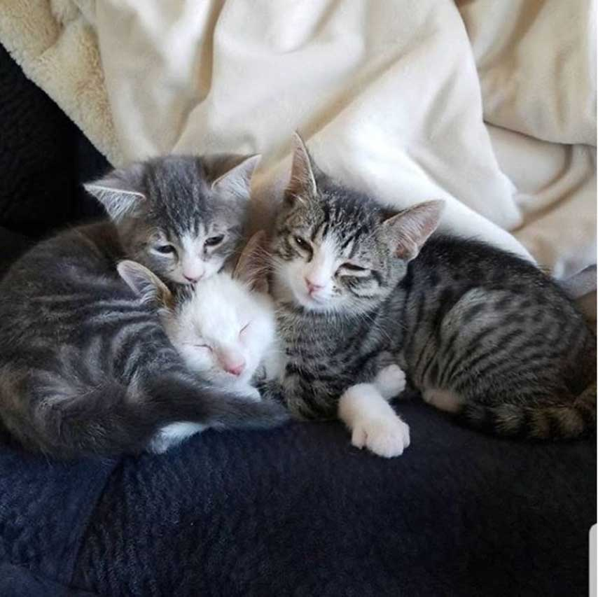 Tre gatti che dormono insieme