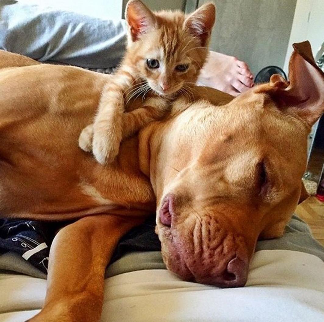 Un gattino che gioca con un cane